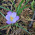 Samedi de février dans le jardin...