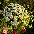 Windows-Live-Writer/Jardin_10232/DSCN0731_thumb