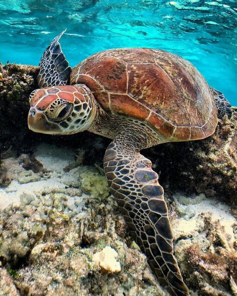 tortue_17