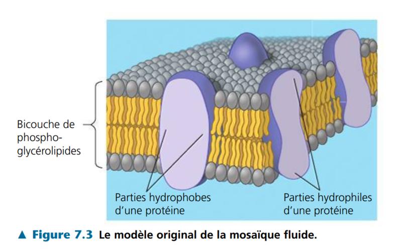 modèle original de la mosaique fluide
