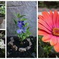 Devenir fleuriste ? ;-)