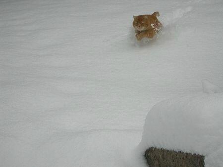à_450px-Rouxy_neige