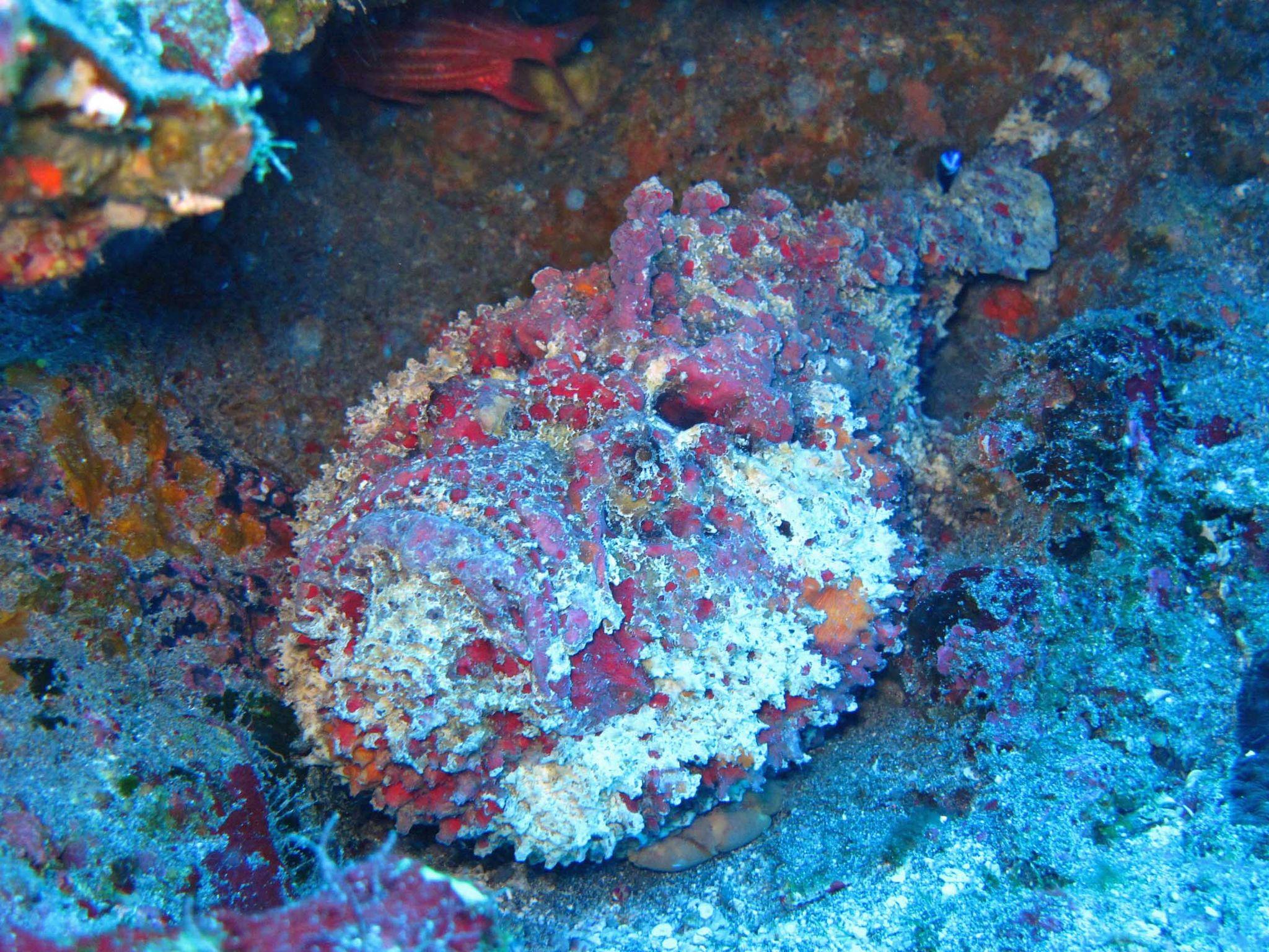 poisson pierre (2)