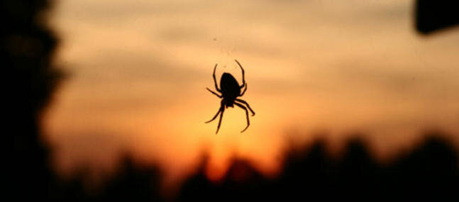 L-araignee-reine-de-nos-fantasmes_imagePanoramique647_286