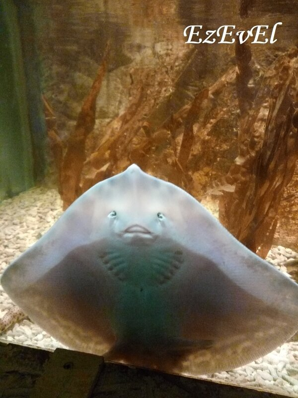 aquarium touraine EzEvEl