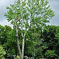 Auprès de mon arbre... remarquable, sculpté ou insolite...