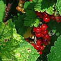 Jardin Poterie Hillen 12061630
