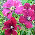 Windows-Live-Writer/Jardin_10232/DSCN0781_thumb