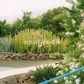 visite d'une bananeraie_plantes grasses_105