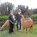 Laura et Cecile et les lamas ,essai de lamatherapie
