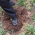M3 plantation du manioc suite
