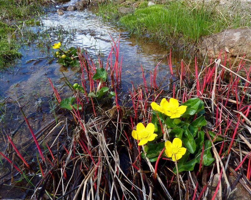 printemps coloré