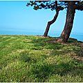 152/365 - 2011 : arbre tout tordu