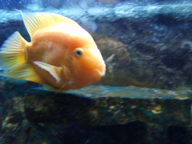 El acuario maravilloso