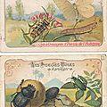 Chromos insectes vintage