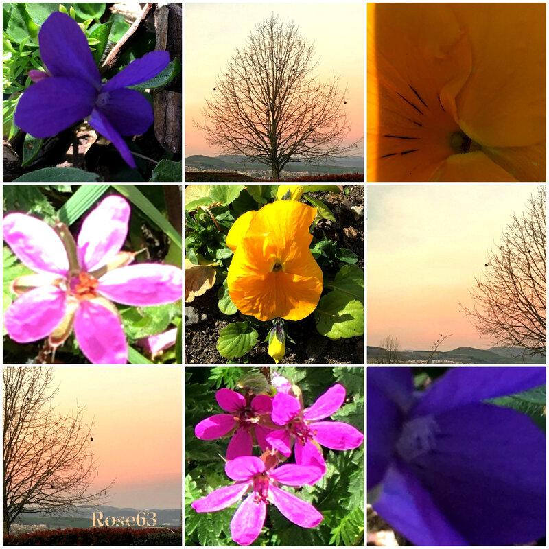 Juste des fleurs sur mes pas Rose63