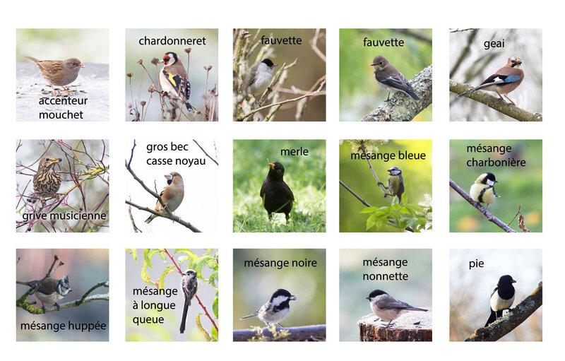 oiseaux-jardin-tous-3