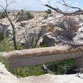 Pont naturel d'arbre pétrifié( soutenu de béton)