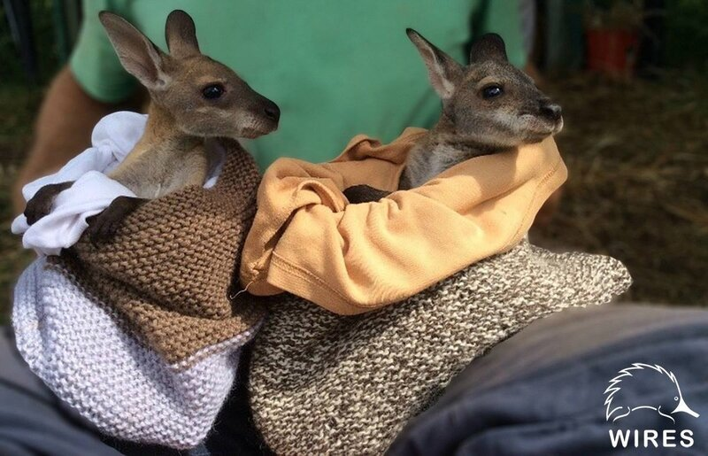 wires-animal-rescue-knit-a-pouch-orphaned-joeys-ka11