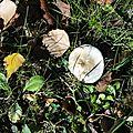 champignon-05699