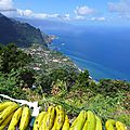 Panorama aux bananes