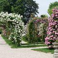 Roseraie Haÿ- les- Roses (3)