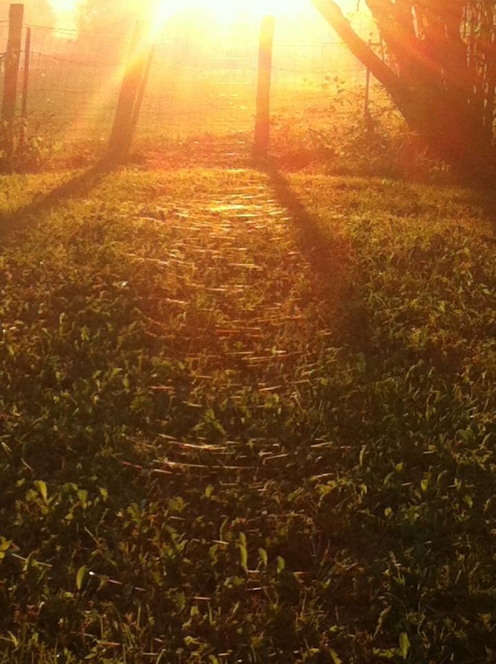 Sur l'herbe rase de cette journée, l'or du