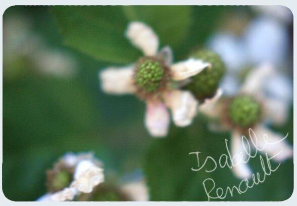 fleurs_mures