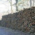 Forêt D'Orléans - Lieu dit