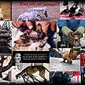 Le génocide animalier :