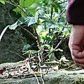 la main de Jules