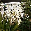 Bouquet du week end # 119 - sem 28