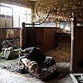 Château abandonné_4479