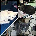 3 chatons le 24 fev