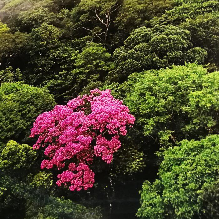 foret-fleur