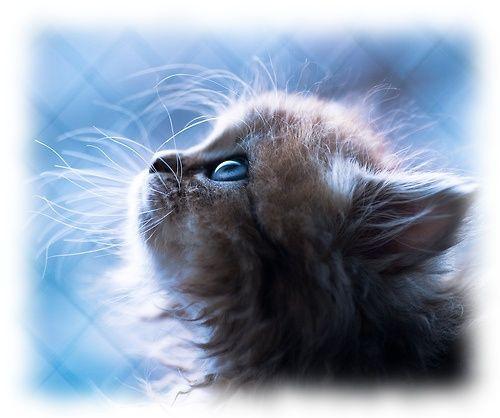 kittenskittenskittens
