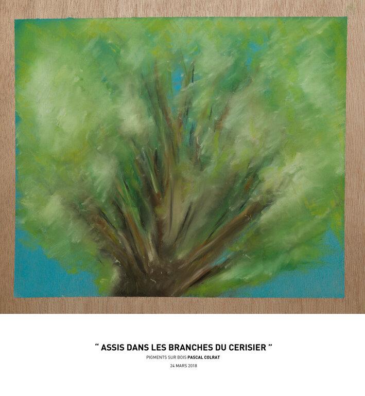 __assis_dans_les_branches_du_cerisier__