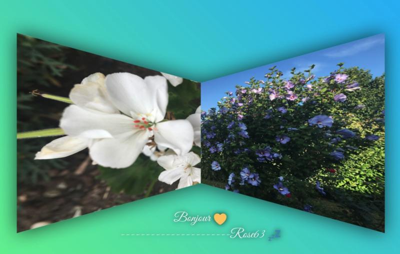 Fleurissons-nous la vie Rose 63 Juille 2018