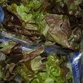 Salade de chêne