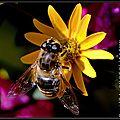Bzzzzz , Maya l'abeille!!