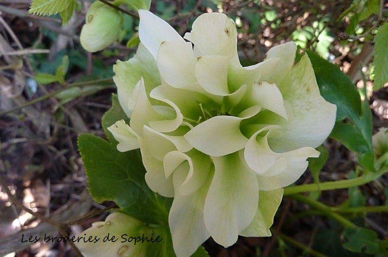 jardin mars 2012 (9)