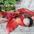 Kkvj les couleurs de l'automne parent notre table...