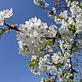 Nos arbres à fleurs