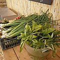 garéoult légumes bio var paca ruiz (3)
