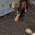 chienne sur Jarry avec 4 chiots 1 disparu 5