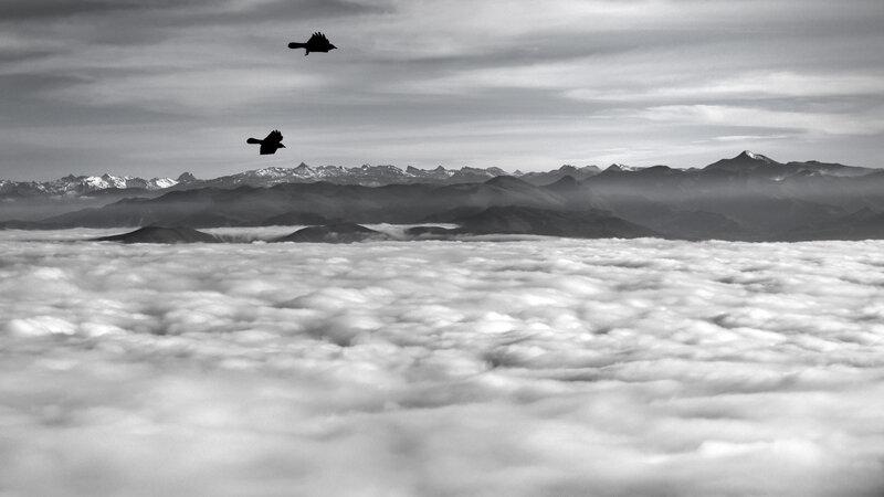 2019 janvier brouillard (2)