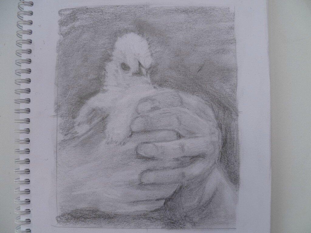 la petite poule d'Isa