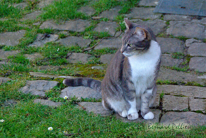 202000206_animaux_chat_03