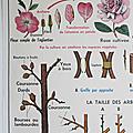 Collection ... affiche la fleur fécondation / multiplication végétative