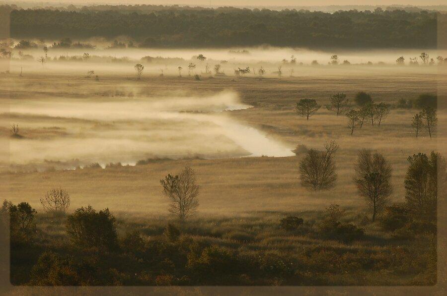 brumes matinales sur le marais de l'étang de Cousseau
